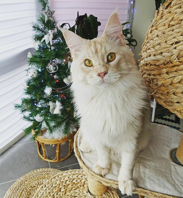 Christmas Cats & Decoration